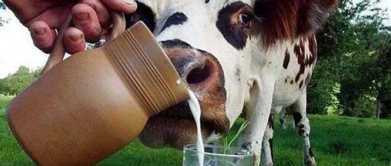 Sekiz Buçuk Aylık Bebeklere İnek Sütü Verilir Mi?